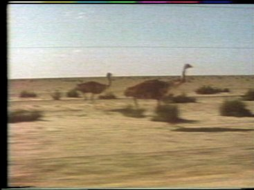 Still frame from Oxide St Junction: emus running along the fence.