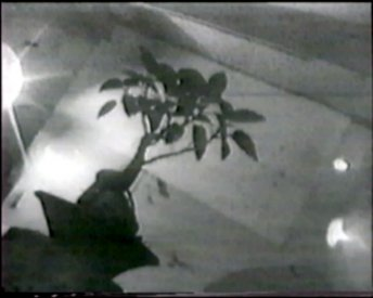 The bonsai tree that was the focus of teh works in Brett Whitely's room at the Yellow House. Frame from Akia Ghost Poems.